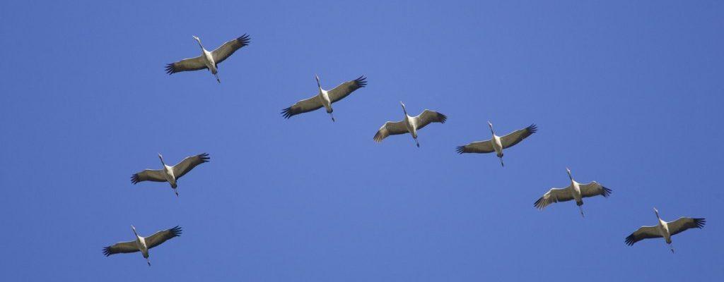 <b>10 травня  – Міжнародний день мігруючих птахів</b>