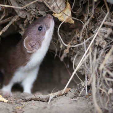 4 жовтня – Всесвітній день захисту тварин