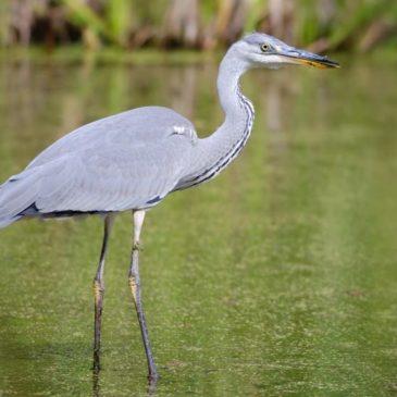 1 квітня – Міжнародний день птахів