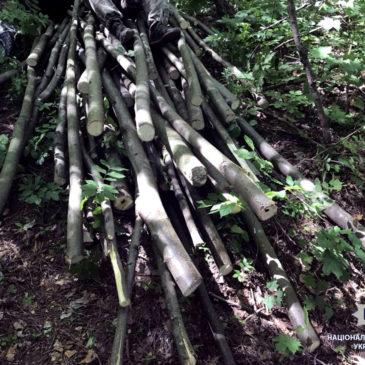 Співробітниками СДО парку були виявлені самовільні поруби дерев