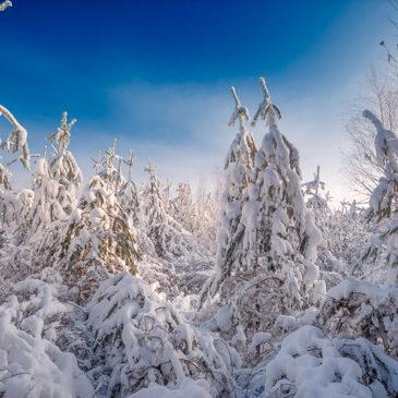 11 січня – Міжнародний день заповідників та національних парків