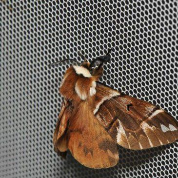 Перші ентомологічні знахідки в 2019 році