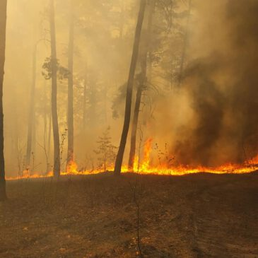 "Пожежа у Національному природному парку ""Слобожанський""."
