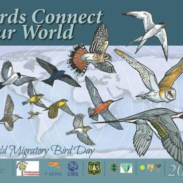 Всесвітній день мігруючих птахів
