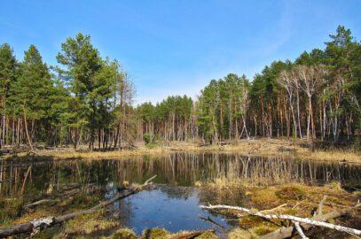 Унікальні водно-болотні угіддя