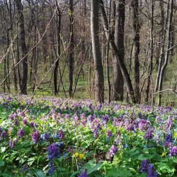 17 квітня – День довкілля в Україні