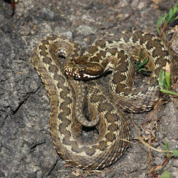Що варто знати про змій